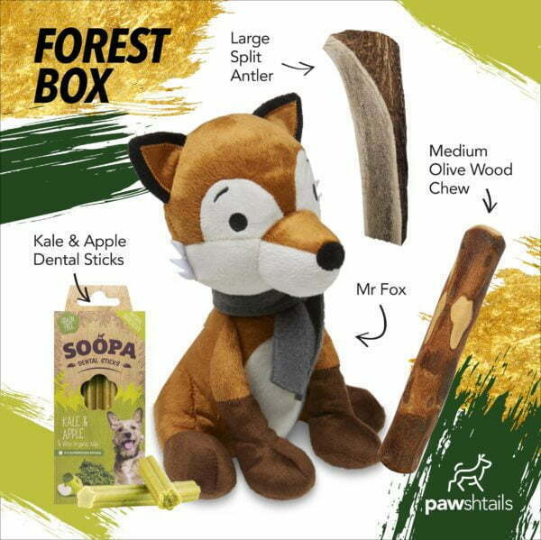 Forest Entertainment Box